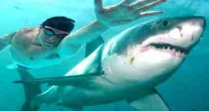 Incredible! Olympic Record Holder, Micheal Phelps Race Against A Great White Shark (Pictured)